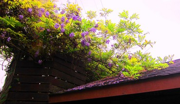 Colorful roof HD wallpaper