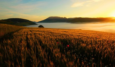 Landscapes flowers fields sunlight spikelets HD wallpaper