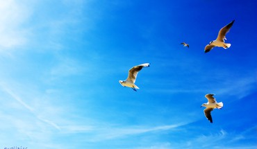 Birds in the blue sky HD wallpaper