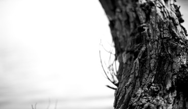 Black and white landscapes nature bark trunk HD wallpaper