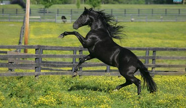 Animals horses nature running HD wallpaper