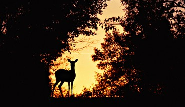 Animaux cerfs mammifères nature silhouettes  HD wallpaper