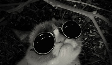 Sunglasses john lennon post awsome grumpy cat HD wallpaper