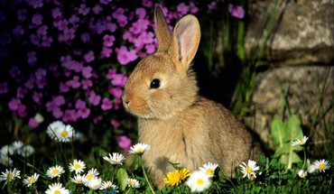 Animals flowers rabbits HD wallpaper