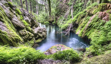 Hdr photography forests moss nature rivers HD wallpaper