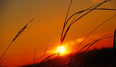 Sun grass sunset HD wallpaper