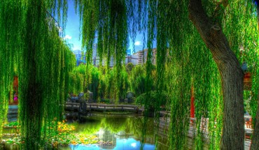 Willows in a city park hdr HD wallpaper