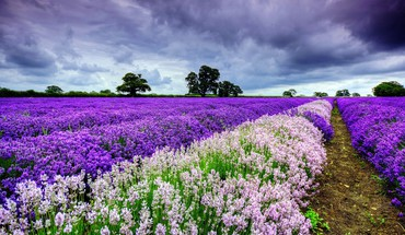 Landscapes multicolor nature purple flowers skyscapes HD wallpaper