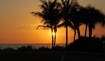 Nature palm trees silhouettes sunlight HD wallpaper