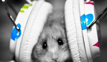Headphones white hamsters mice HD wallpaper
