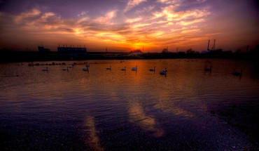 Swans at dusk HD wallpaper