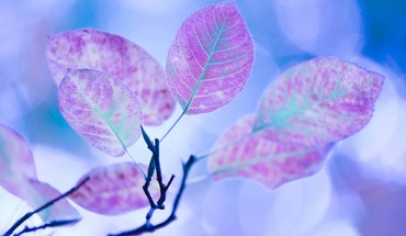 Leaves nature purple HD wallpaper