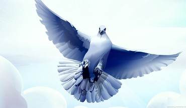 Artwork birds blue pigeons white HD wallpaper