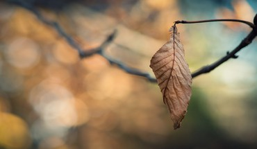 Autumn closeup depth of field leaves macro HD wallpaper