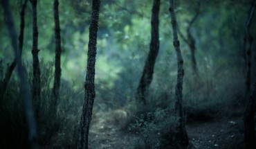 Depth of field forests gloomy landscapes nature HD wallpaper