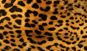 Animals fur leopard print patterns HD wallpaper