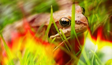 Closeup colors frogs multicolor nature HD wallpaper