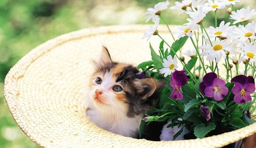 Kitten in a hat with flowers HD wallpaper