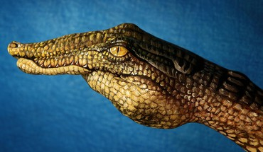 Animals crocodiles funny hands HD wallpaper