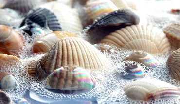 Seashells water HD wallpaper