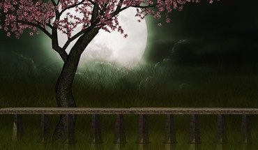 Sweet of cherry tree HD wallpaper