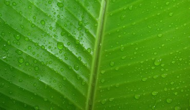 Green leaves nature water drops HD wallpaper