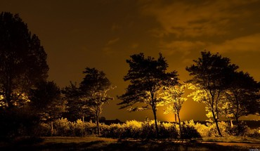 Light nature night trees HD wallpaper