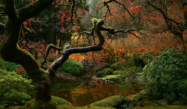 Japanese gardens trees HD wallpaper