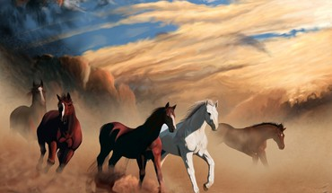 Nature animals dust horses HD wallpaper