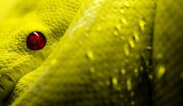 Yeux reptiles rouges échelles serpents  HD wallpaper