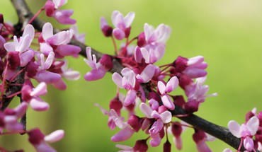 Blossoms fleurs du printemps  HD wallpaper