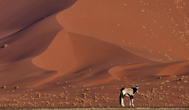 Landscapes nature animals desert national geographic antelope namib HD wallpaper