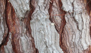 Bark trees HD wallpaper