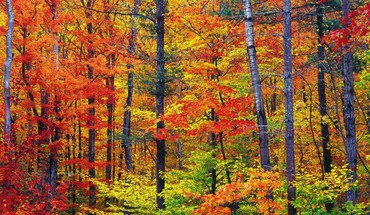 Nature colors new hampshire HD wallpaper