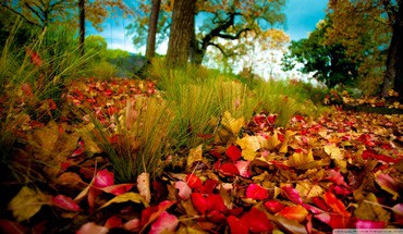 Fallen leaves HD wallpaper