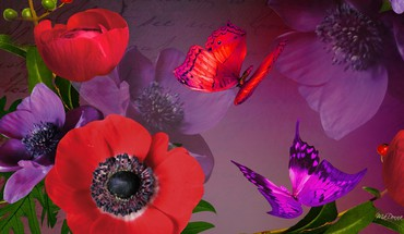 Purple perfect poppy HD wallpaper