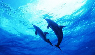 Nature animals dolphins sea HD wallpaper