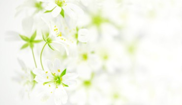 White background HD wallpaper