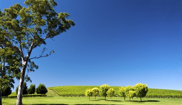 Hills landscapes nature south australia vineyard HD wallpaper