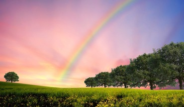 Rainbows trees HD wallpaper