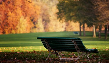 Bench grass parks trees HD wallpaper