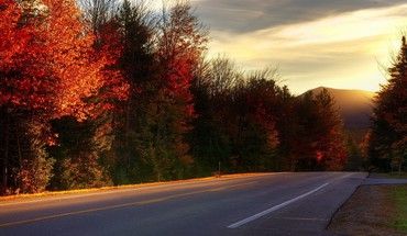 Leaves roads sunlight trees HD wallpaper