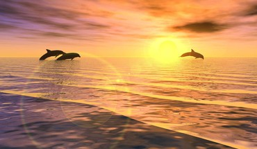 Jumping dolphins at sunset HD wallpaper