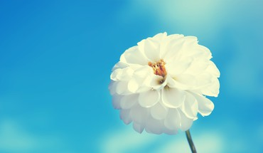 Blue skies flowers nature white HD wallpaper