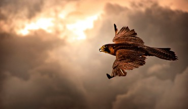 Animals birds brown clouds flight HD wallpaper