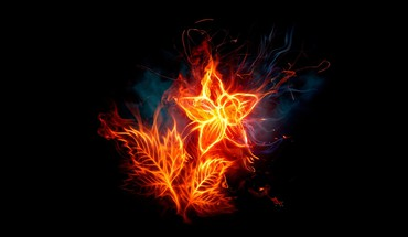 Abstract black background fire flower flaming HD wallpaper