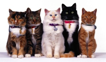 Animals cats kittens pets white background HD wallpaper
