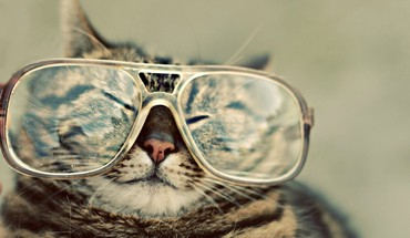 Cats animals glasses HD wallpaper