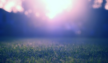 Grass ground light HD wallpaper