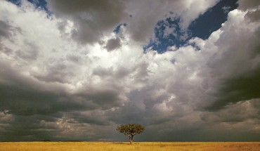 Masai mara national reserve HD wallpaper
